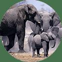 Custom elephant family circuit