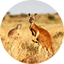 Safari voyage de luxe australie
