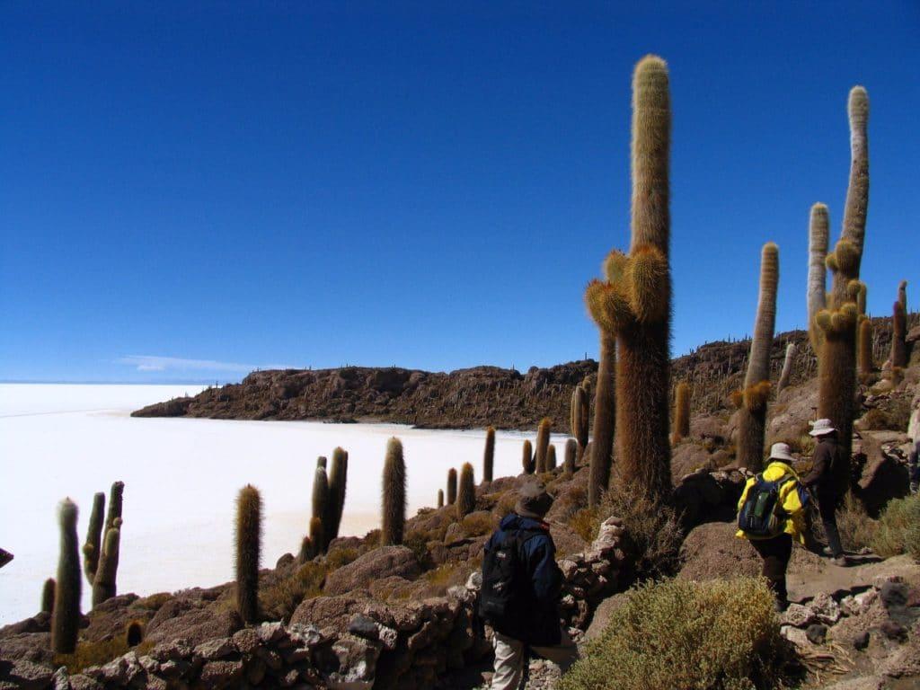 Cactus en Bolivie - voyage a la carte