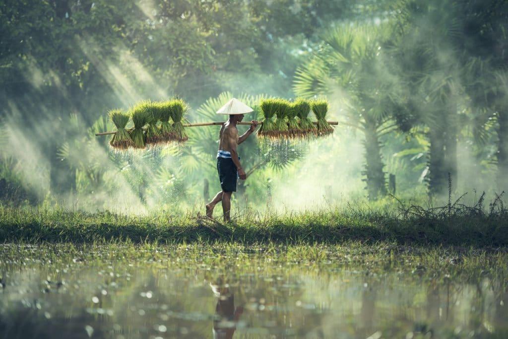 Decouverte de la culture au Laos pendant voyage sur mesure