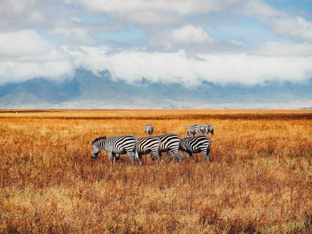 ngorogoro, Tanzanie