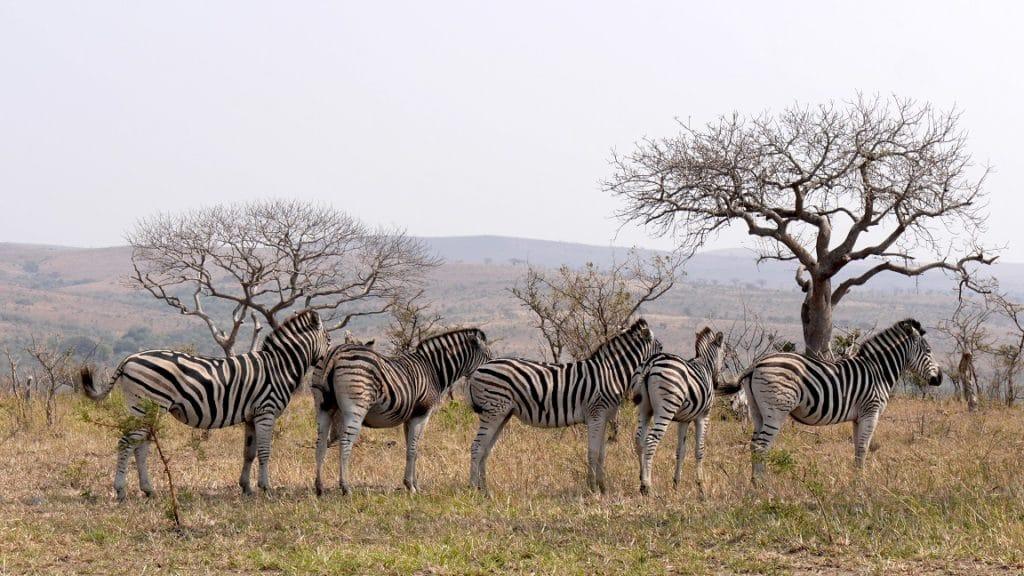 voyage de luxe afrique du sud