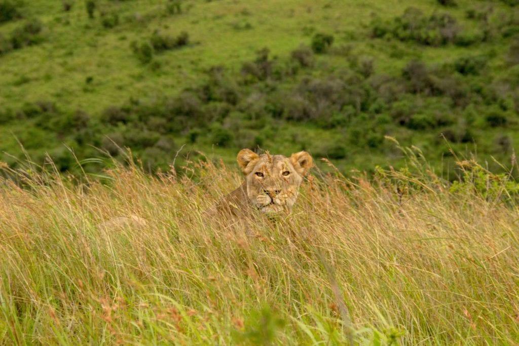 hluhluwe Afrique du sud