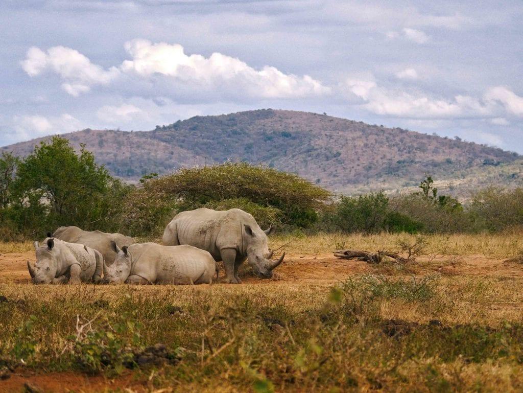 hluhluwe, Afrique du sud