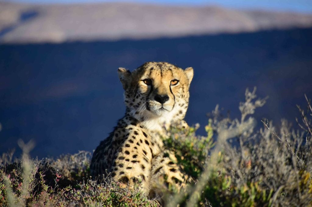 montage, Afrique du sud