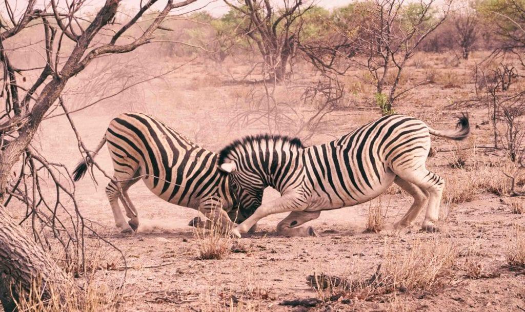 voyage sur mesure Namibie