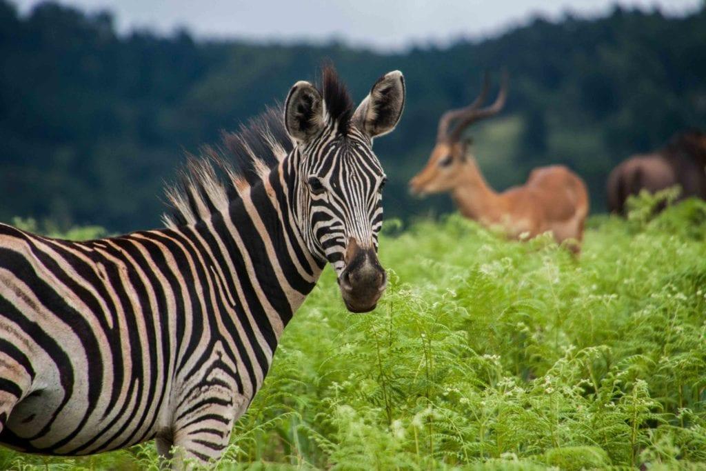 swaziland, Afrique du sud