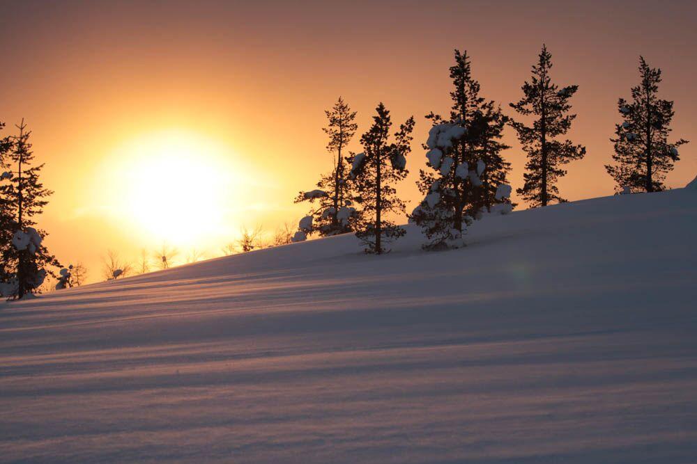 voyage sur mesure - excursion au cœur des forêts enneigées de laponie