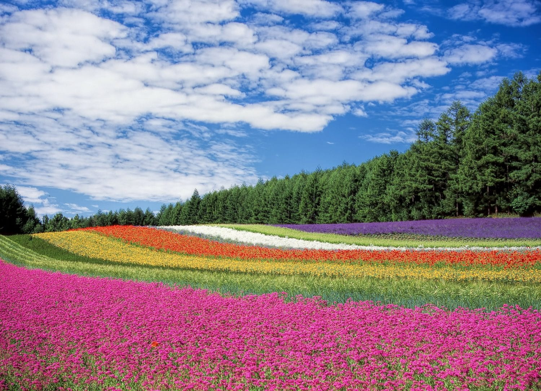 voyage sur mesure japon - fleurs au Japon
