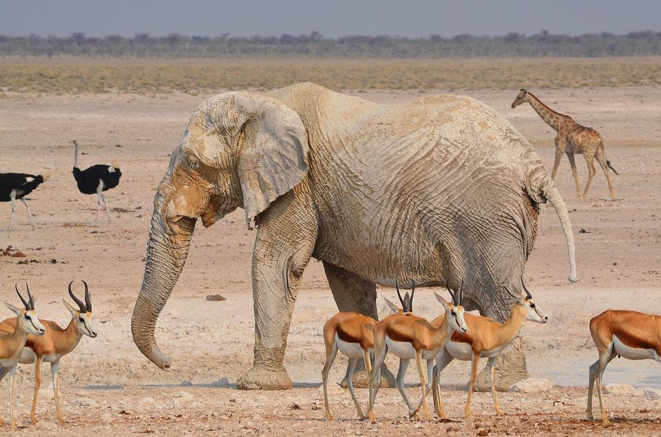 voyage sur mesure - namibie safari