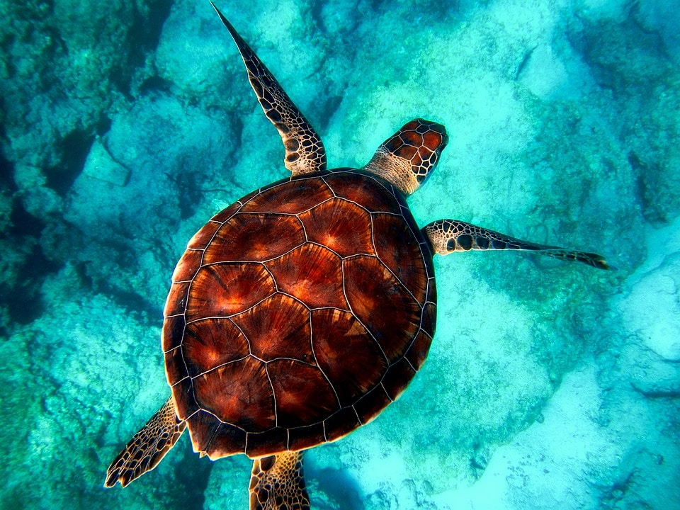tortues-faune-nature-zante-plongée-excusions