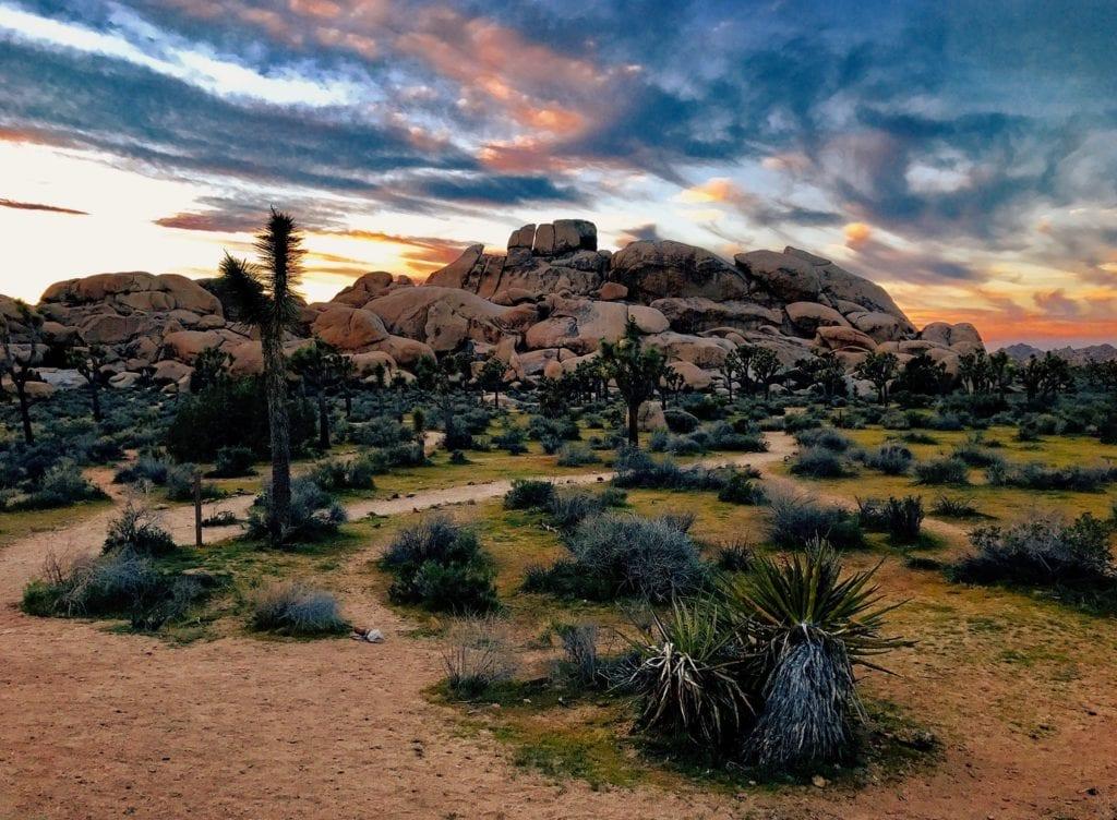 voyage sur mesure californie - parc joshua tree
