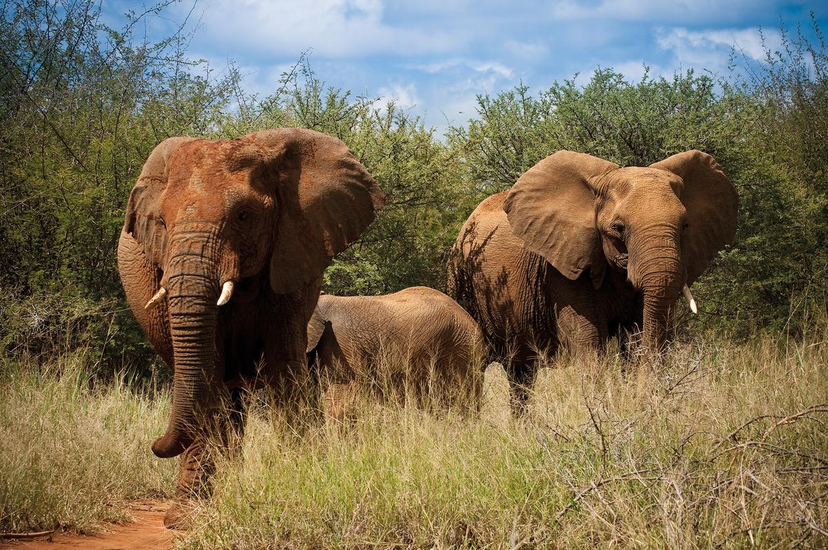 voyage sur mesure - reserve madikwe afrique du sud