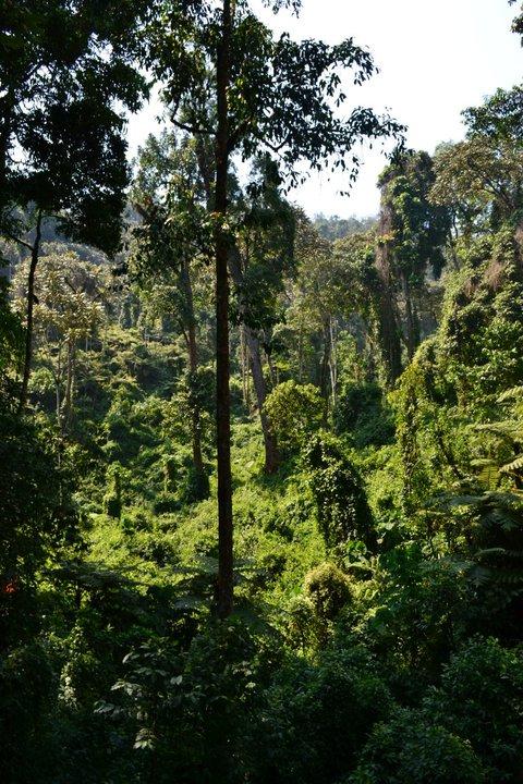 foret de nyungwe, Rwanda - agence de voyage sur mesure