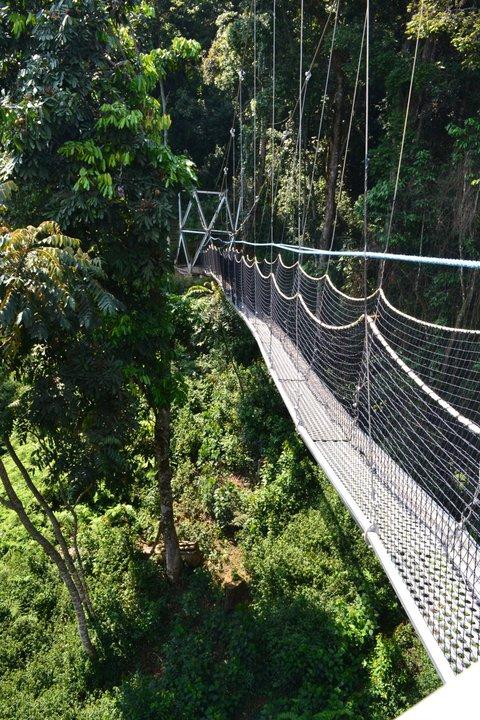 Pont suspendu forêt de Nyungwe - agence de voyage luxe monaco