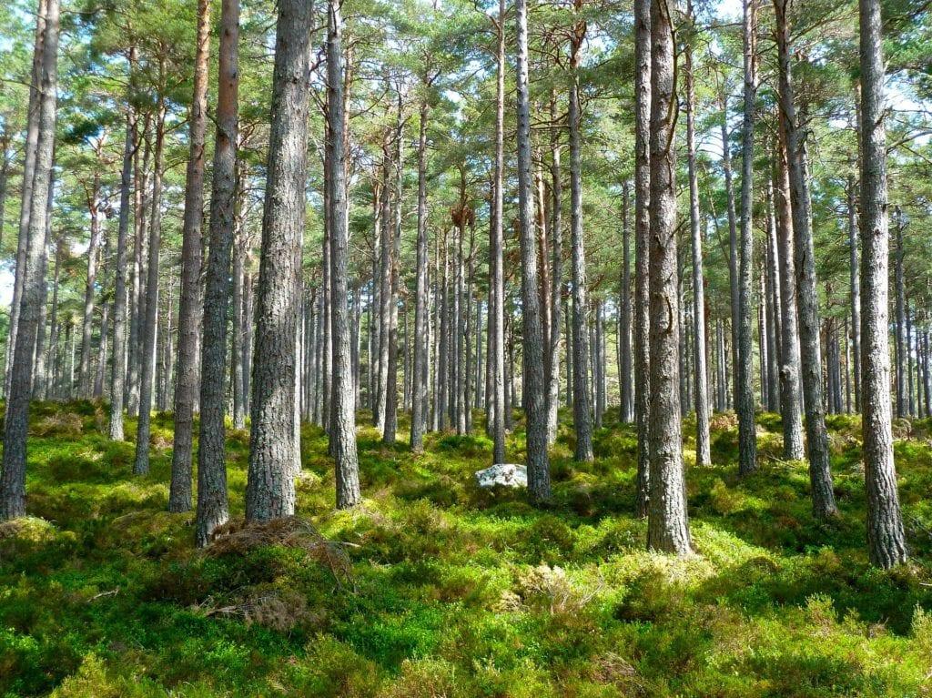 voyage éco-responsable voyage de luxe et écologie
