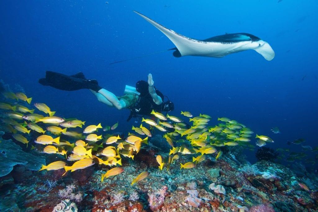 raie manta - plongée sous marine