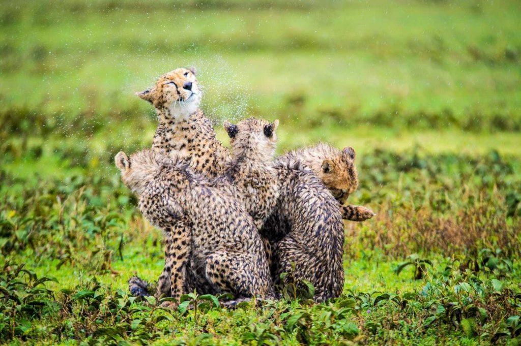 Escapade nature Afrique Australe