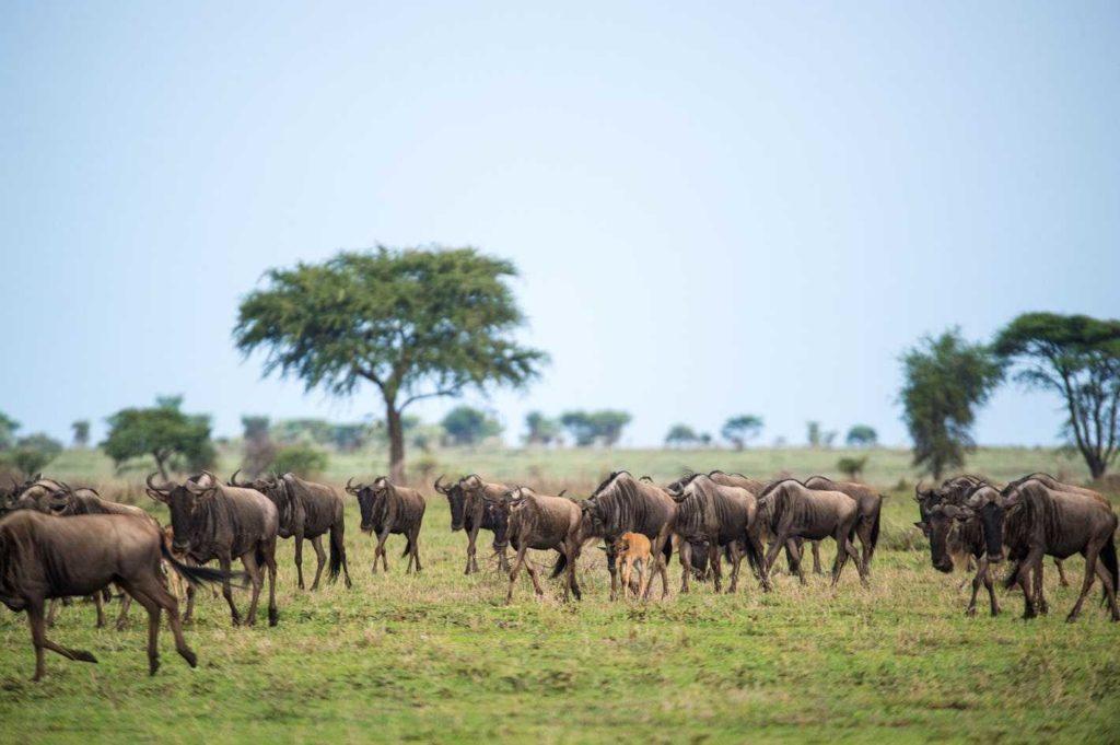 Séjour luxe Tanzanie