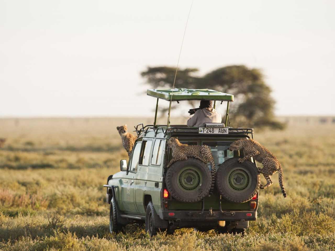 Safari - Voyage luxe Tanzanie