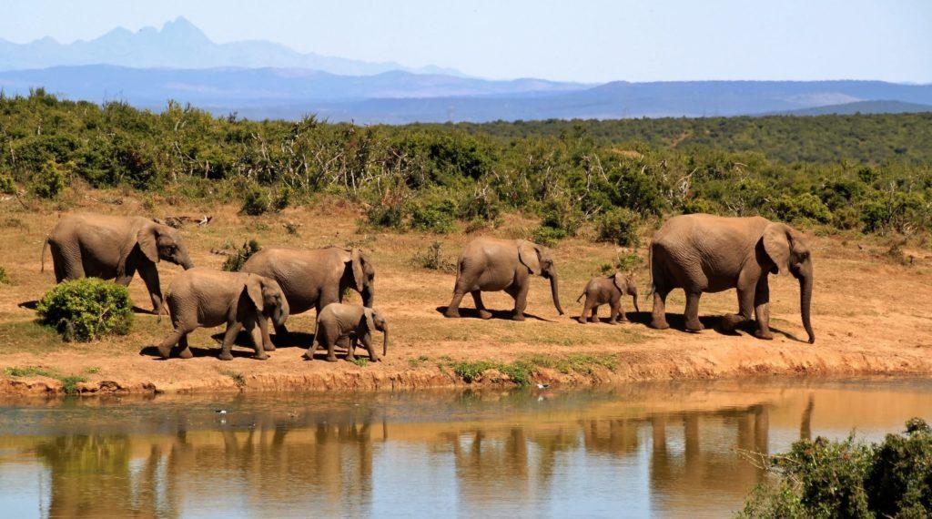 Voyage safari Tanzania